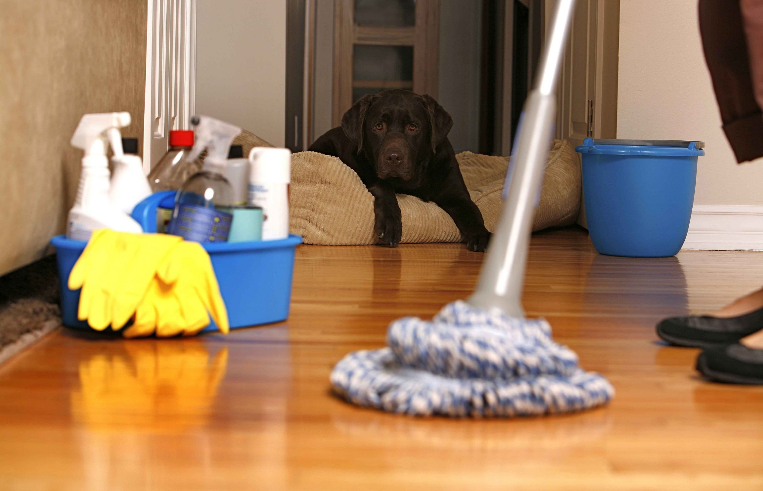 Types of cleaning